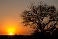 African Sunrise Silhouette